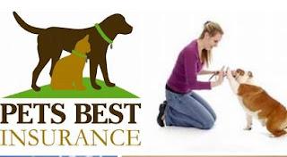 Pet страхування здоров'я-трюки