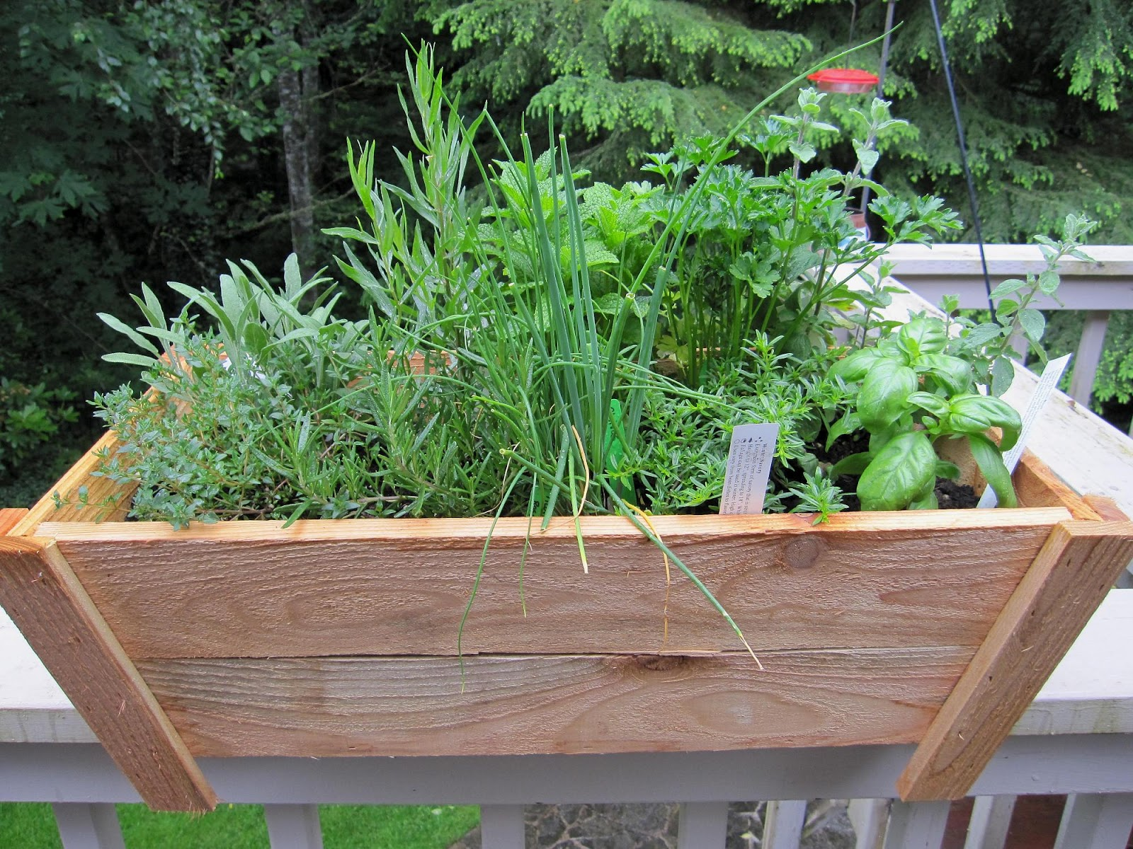 Art Garden Diva: Herb Garden In Containers