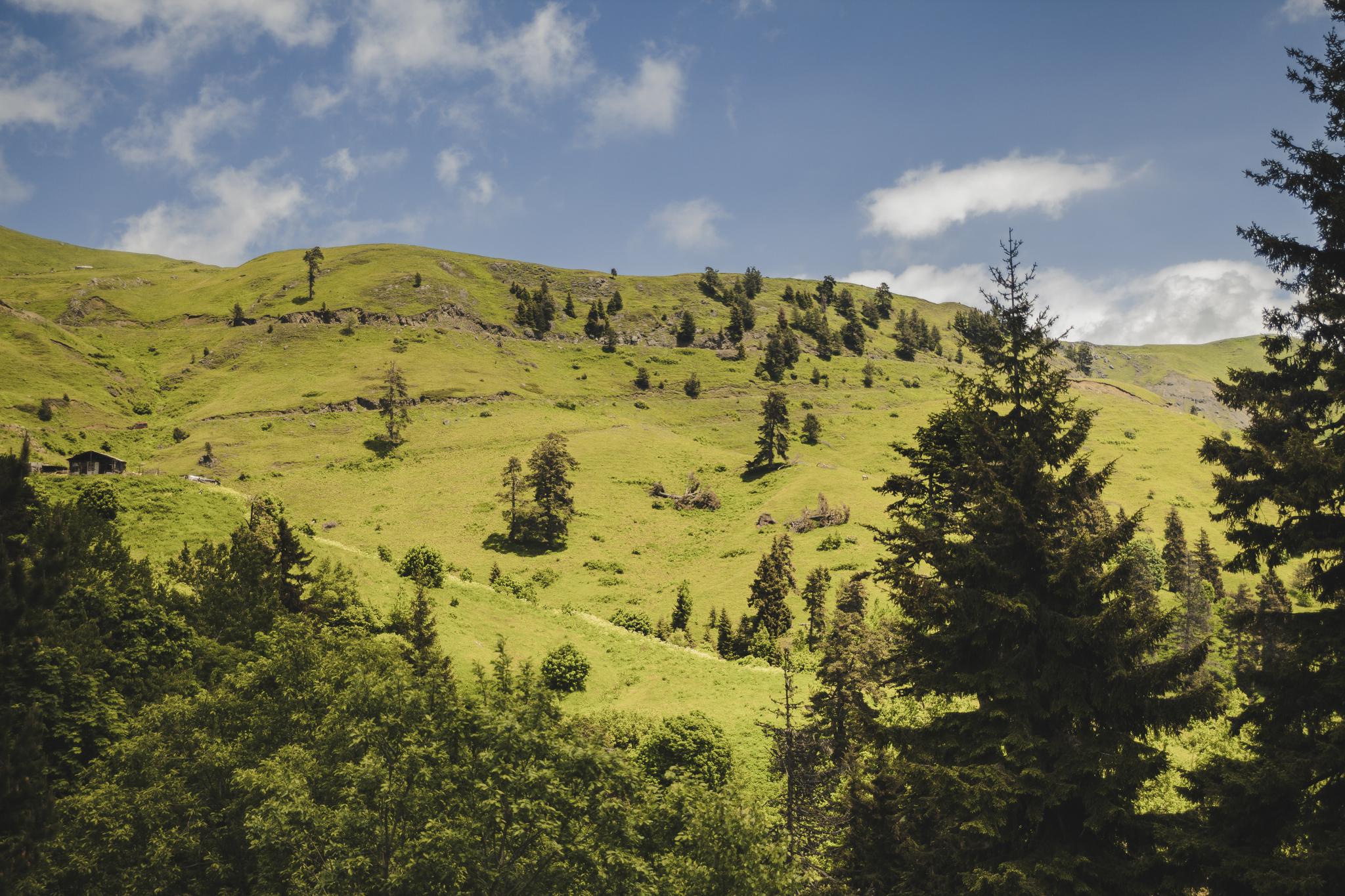 Borjomi-Kharagauli National Park 3