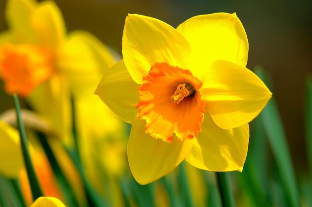 y nghia hoa thuy tien