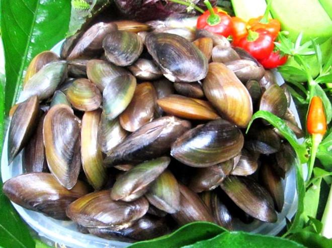 Phi Cầu Sài đặc sản nổi tiếng biển Hải Tiến Thanh Hóa