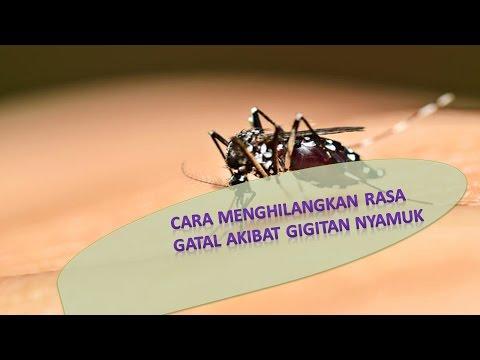 5 Cara Atasi Gatal Akibat Di Gigit Nyamuk