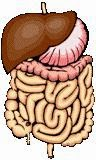 Gastrointestinal Health Information