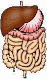 Gastrointestinal Health Information