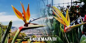 How To Grow A Bird Of Paradise Plant Indoors: Bird Of Paradise (Strelitzia) Care