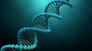 Why Every Father Must Conduct DNA On Children