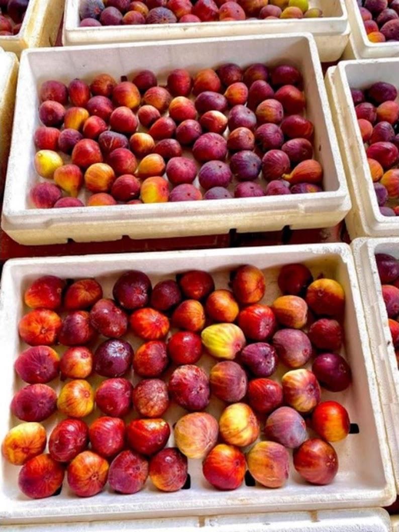 Bibit buah tin merah jumbo jenis Moyuna cangkok cepat berbuah Sabang