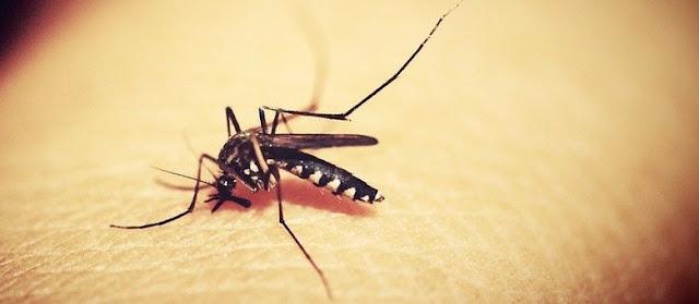 Ivaiporã registra 936 casos de dengue