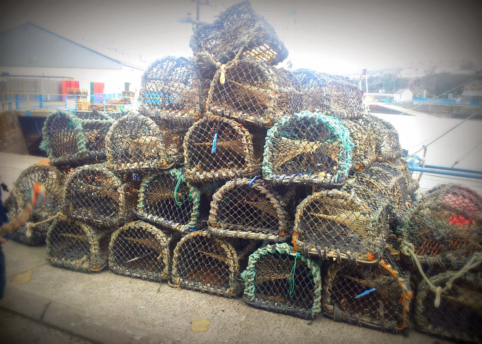 , Milford Haven:The Docks- Lobster Pots and Hermit Crabs