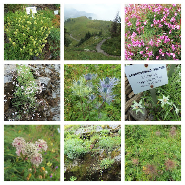 Some of the Alpengarten's scenes and flowers