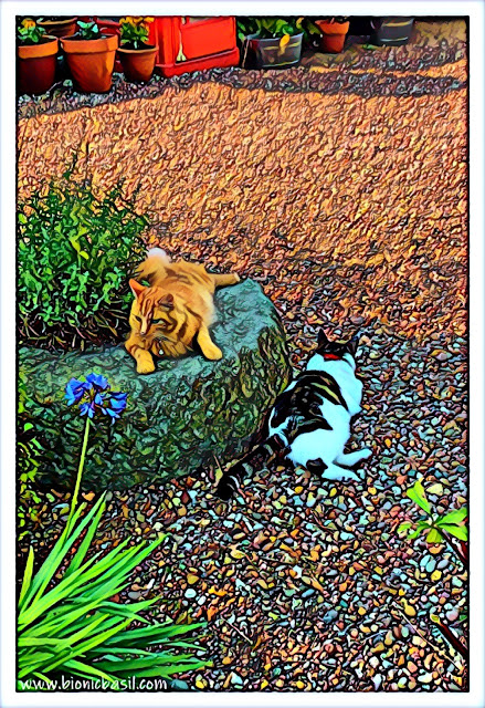 Fudge and Melvyn's Surveillance Selfie ©BionicBasil® Caturday Art