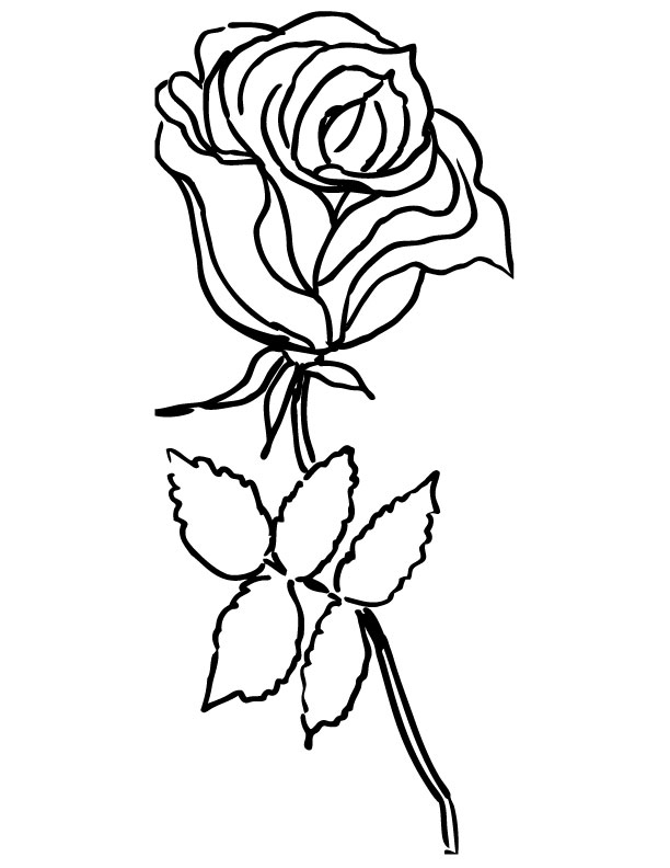 image of rose for coloring pages | Only roses coloring pages