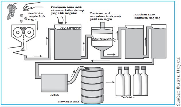 Bioteknologi dengan menggunakan mikroorganisme plengdut proses pembuatan minuman anggur ccuart Choice Image