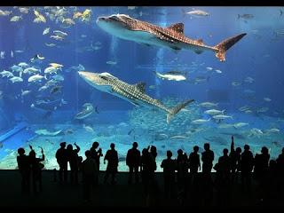 zemūdens zoo dubaijā