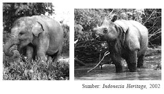Persebaran Flora Dan Fauna Di Indonesia 2
