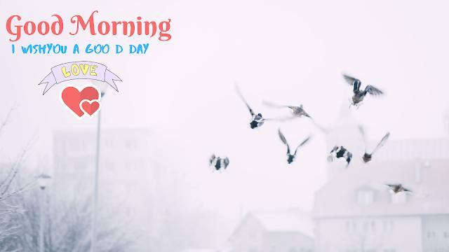 Many Little Bird Good Morning image