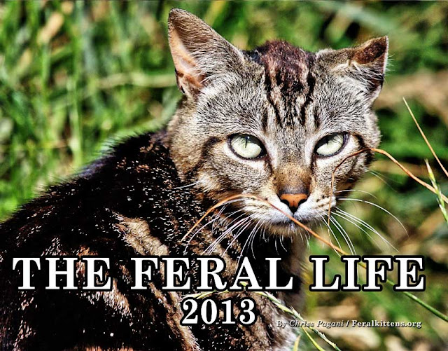 The Feral Life 2013 Cat Photo Calendar now available at Lulu.com