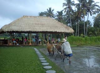 http://www.teluklove.com/2017/02/destinasti-objek-wisata-desa-guliang.html