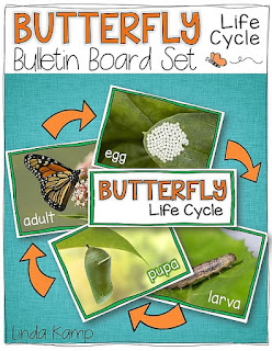 Free butterfly life cycle bulletin board set