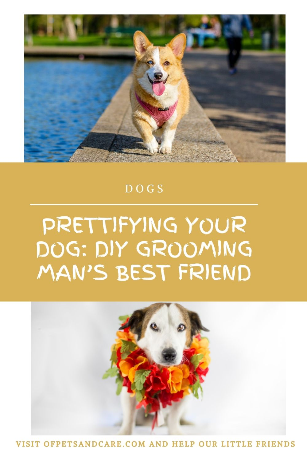 Prettifying Your Dog: DIY Grooming Man's Best Friend