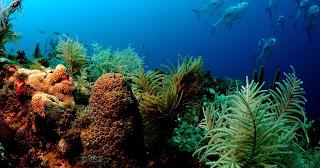 Coral reef 17