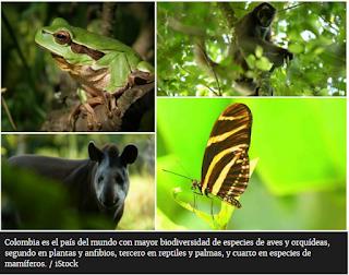 https://www.elespectador.com/noticias/medio-ambiente/asi-sera-la-celebracion-del-dia-mundial-del-medio-ambiente-con-colombia-como-pais-anfitrion-articulo-922758