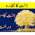 Tree of the paradise || jannat kay drahatte.