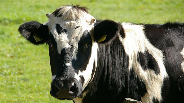 Argentina podrá exportar bilis bovina a Nueva Zelanda