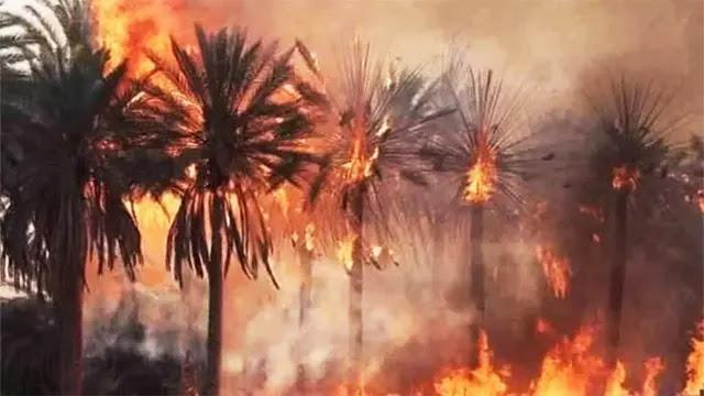 زاكورة: الحرائق تلتهم الآلاف من أشجار النخيل بتالوين وتوغزا