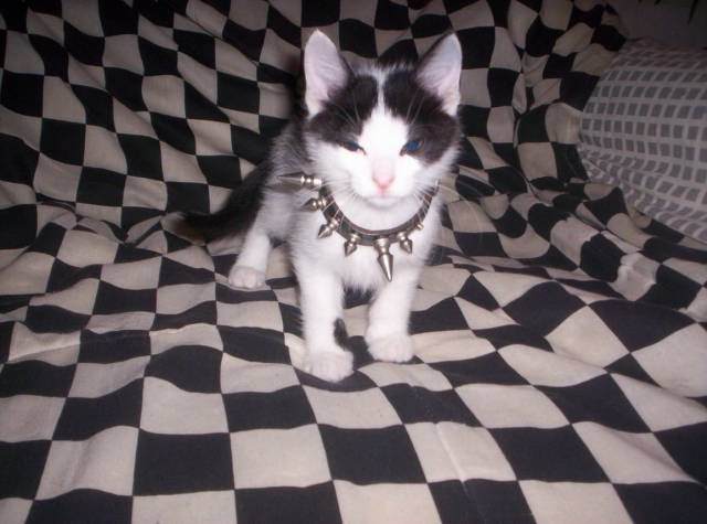 Funny cats - part 346, cute cat picture, cat photos, cat gif