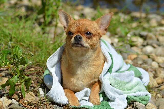 Things to Avoid While Bathing Your Dog