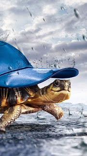 Turtle With Cap Raining Mobile HD Wallpaper