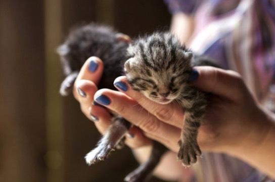 Penjelasan Kenapa Kucing Memakan Anaknya Sendiri