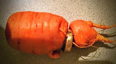 Απίστευτο κι όμως αληθινό: Είχε χάσει τη βέρα του και του την επέστρεψε... ένα καρότο