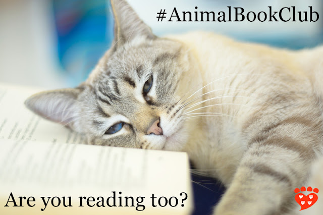 A sweet cat rests her head on a book