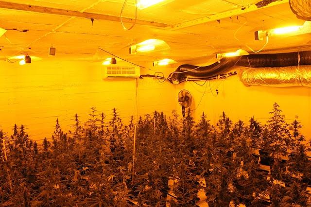 29χρονος καλλιεργούσε υδροπονική κάνναβη στο υπόγειο του σπιτιού του