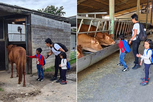 't Silsomhof children farm near Brussels flemish brabant