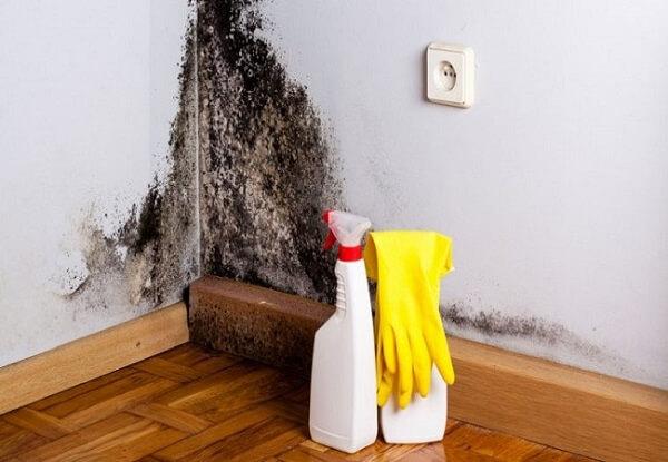 mofo em infiltração na parede