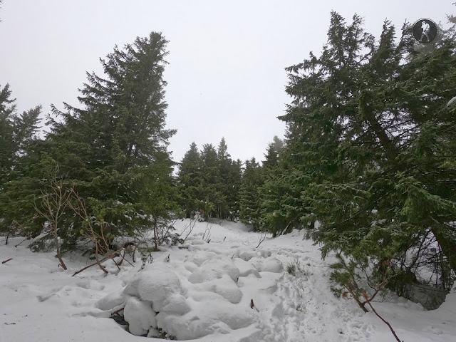 Traseu de iarnă pe Vârful Giumalău (1858 m)