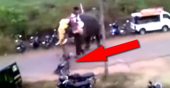 Elefante enfurecido destrói veículos durante festival na Índia - Capa