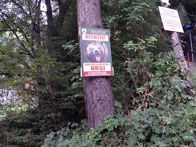 Ostrzeżenie o niedźwiedziach w rumuńskich górach