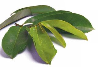 daun sirsak Obat Herbal Tradisional Penurun Asam Urat