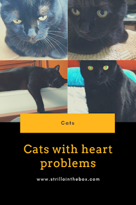 gatto cardiomiopatia ipertrofica