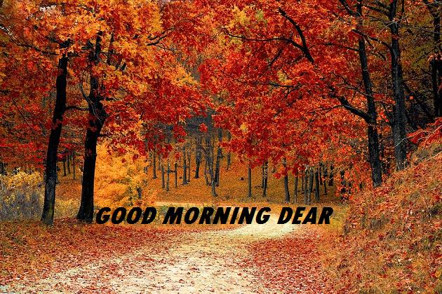 good morning scenery video