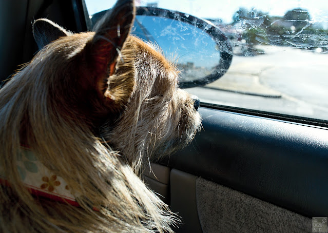 How to find a lost dog, drive or walk around the neighborhood