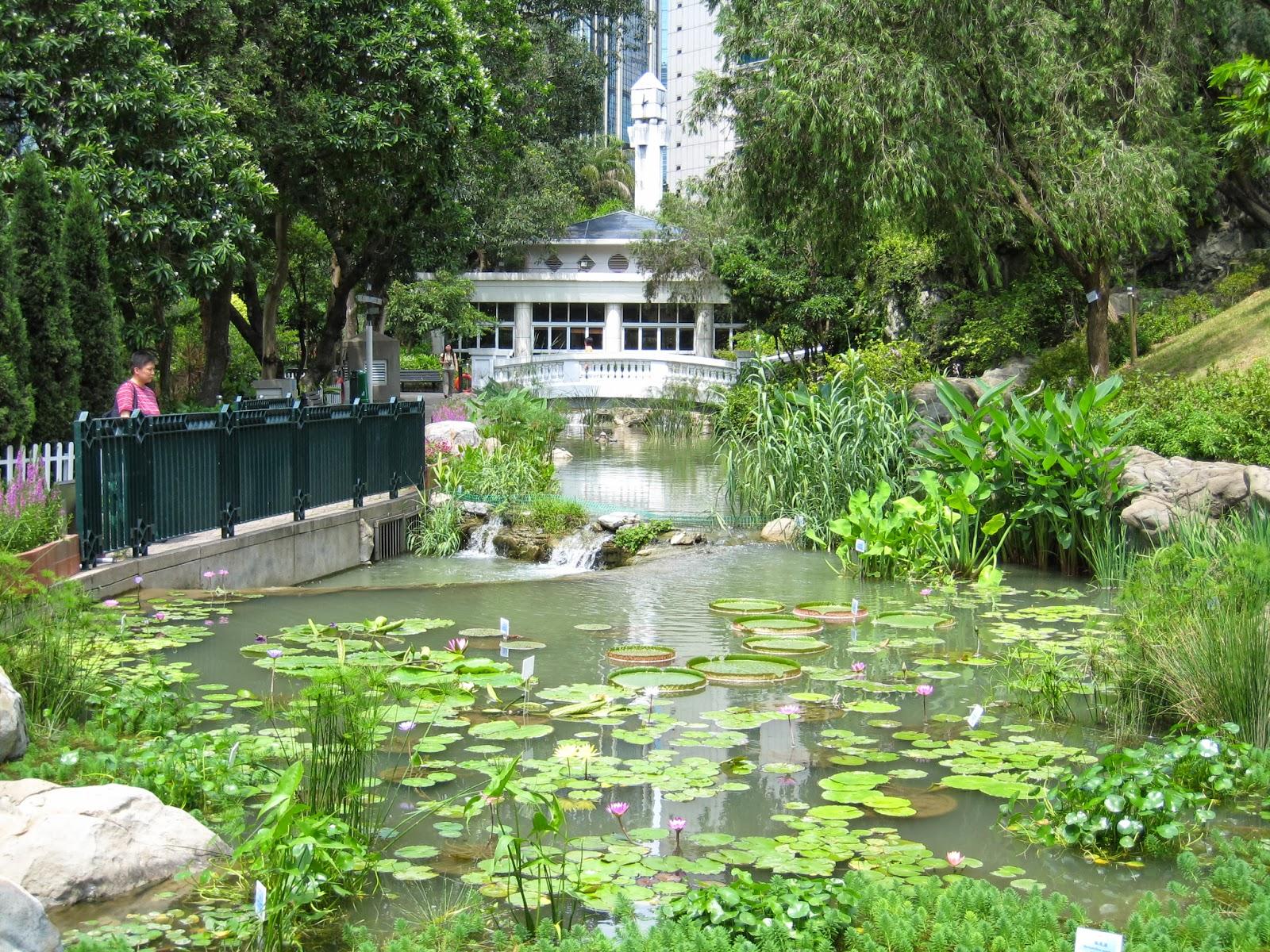 隨影: 070623香港公園內的荷花池