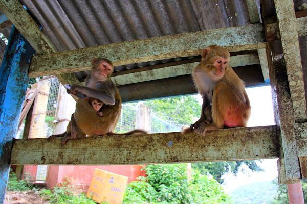 Monos en el monte Popa