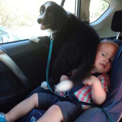 Perro de paseo en el auto