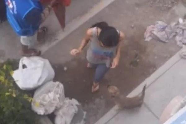 Cachorro volta sozinho de moto-táxi após ser esquecido no mercado