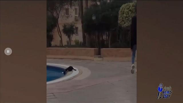 فديو يواجة انتقادات على سوشيال ميديا لطفلة ركلت قطة في حمام السباحة ArabNews2Day
